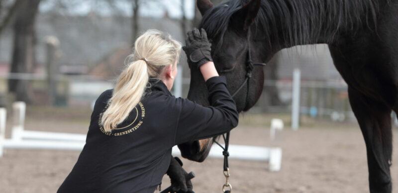 KS Ganzheitliches Pferdetraining