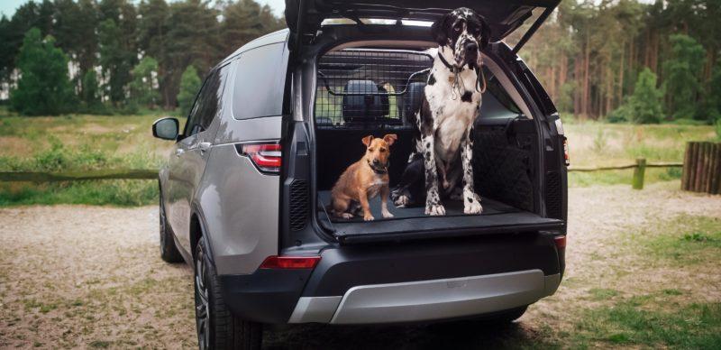 Land Rover Live Hunde in Osnabrück
