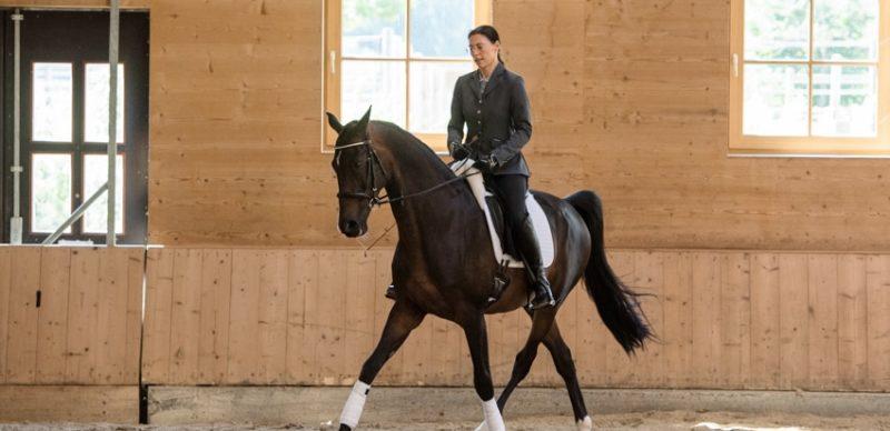 Geschmeidig und gesund – wie Seitengänge unseren Pferden helfen